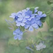 Blooming Blues Art Print