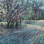 Blooming Bradford Art Print