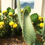 Blooming Cactus Art Print
