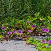 Blooming Cross Vines Along The Beach Art Print