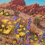 Blooming Desert Art Print