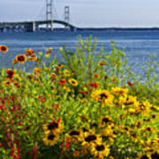 Blooming Flowers By The Bridge At The Straits Of Mackinac Art Print