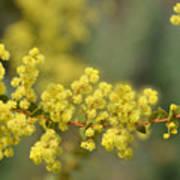 Blooming In Yellow Art Print