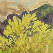Blooming Palo Verde Art Print