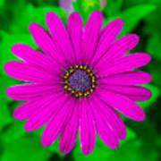 Blooming Purple Art Print