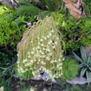 Blooming Succulent Plant. Amazing Art Print