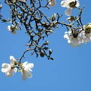 Blooming Trees Art Print White Magnolia Flowers Baslee Troutman Art Print