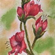 Blooms 'n Red Art Print