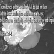Blossom As The Rose Art Print