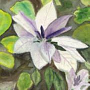 Blossom At Sundy House Art Print