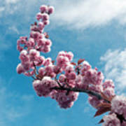 Blossom Impressions Art Print