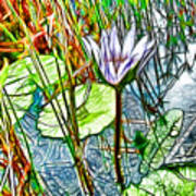 Blossom Lotus Flower In Pond Art Print