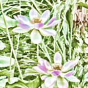 Blossom Pink Lotus Flower Art Print