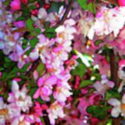 Blossoms 1 Art Print