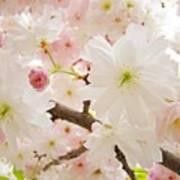 Blossoms Art Print 53 Sunlit Pink Tree Blossoms Macro Springtime Blue Sky  Art Print