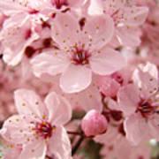 Blossoms Art Prints 63 Pink Blossoms Spring Tree Blossoms Art Print