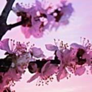 Blossoms At Sunset Art Print