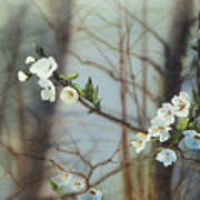 Blossoms In The Wild Art Print