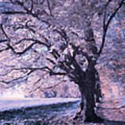 Blossoms In Winter Art Print