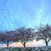 Blossoms Art Print by JC Findley