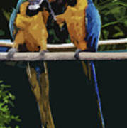 Blue And Gold Macaw 1 Art Print