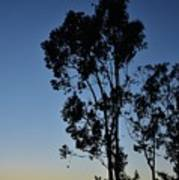 Blue And Gold Sunset Tree Silhouette I Art Print