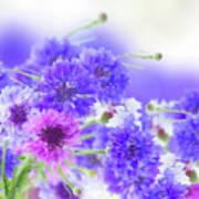 Blue And Violet Cornflowers Art Print