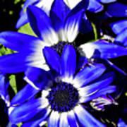 Blue Beauties Art Print