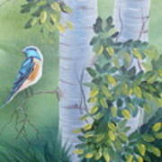 Blue Bird In A Birch  Art Print