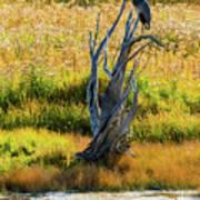Blue Bird Not Quite Stumped Art Print