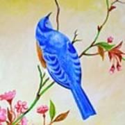 Blue Bird On Cherry Blossom  Art Print
