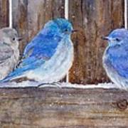 Blue Birds Fly Art Print
