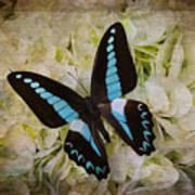Blue Black Butterfly Dreams Art Print