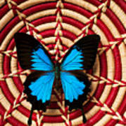Blue Black Butterfly In Basket Art Print