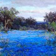 Blue Bonnets Art Print