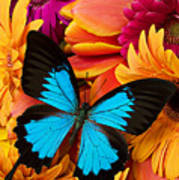 Blue Butterfly On Brightly Colored Flowers Art Print