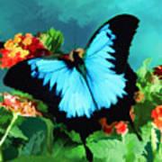 Blue Butterfly On Lantana Plant Oil Painting Art Print