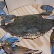 Blue Claw Crab Art Print