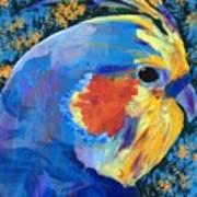 Blue Cockatiel Art Print