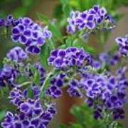 Blue Cottage Flowers Art Print