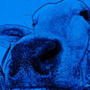 Blue Cow Art Print