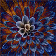 Blue Dahlia Art Print