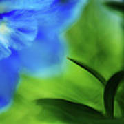 Blue Delphinium Art Print