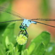 Blue Dragonfly And Bud Art Print