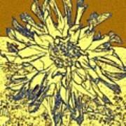 Blue-edged Dahlia Art Print