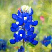Blue-est Of Blues Art Print