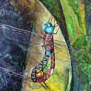 Blue-eyed Darner Mating Wheel Art Print