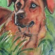 Blue Eyed Dog Art Print