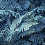 Blue Fern Leaves Abstract. Nature In Alien Skin Art Print