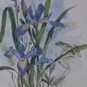 Blue Flags Art Print